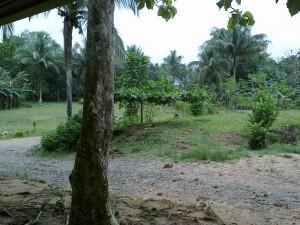 Jalan dan taman