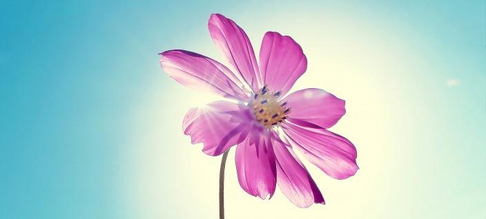 bunga sendiri